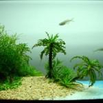 Đặt bể cá cảnh theo phong thủy thế nào cho đúng?